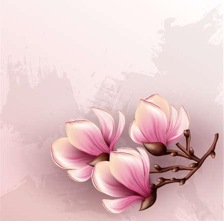 magnolia tree: Magnolia branch isolated