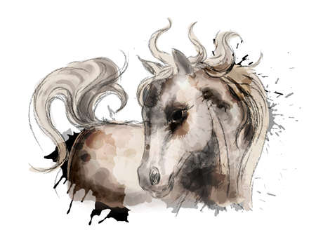 Watercolor little cute horse painting Vector