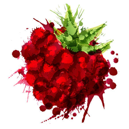 Raspberry made of colorful splashes on white background Illustration