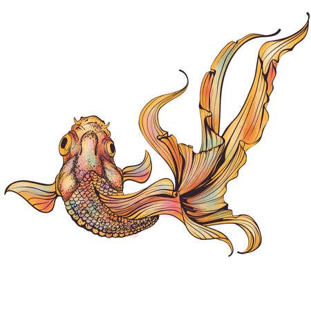 Goldfish on white background Stock Vector - 21563435