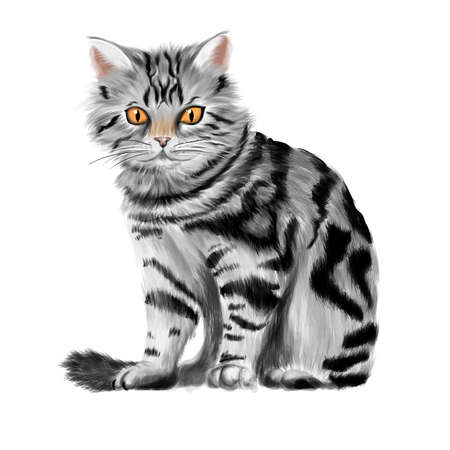 Vector illustration of sitting tabby kitten 向量圖像