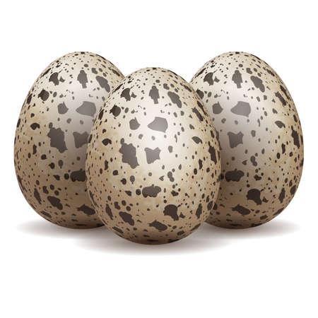 Quail eggs isolated Ilustração