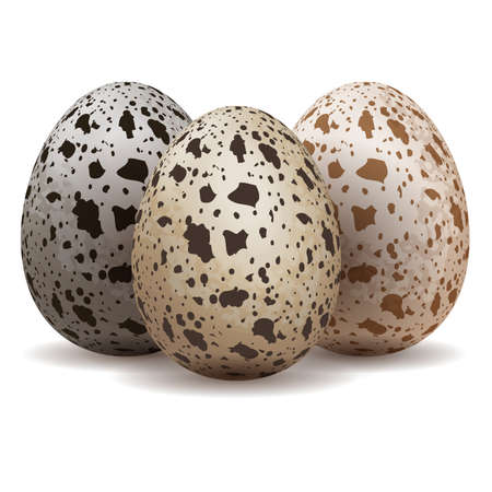 Quail eggs isolated Imagens - 24395175