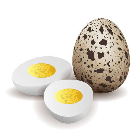boiled eggs: Boiled quail eggs isolated Illustration