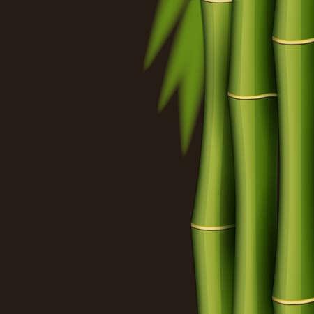 bamboo border: Bamboo design template Illustration