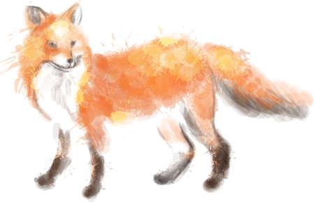 Fox watercolor illustration Vector