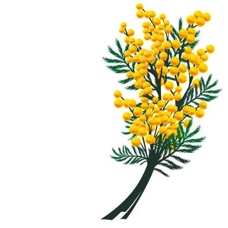 미모사 꽃