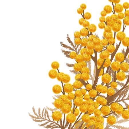 Mimosa bloemen