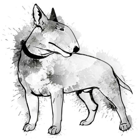 bull dog: Bull terrier grunge illustration Illustration