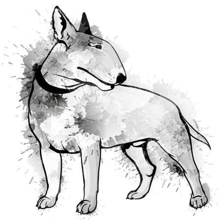 bull terrier: Bull terrier grunge illustration Illustration