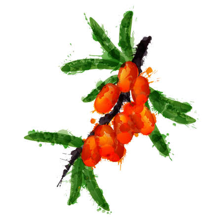buckthorn: Sea buck thorn made of colorful splashes on white background