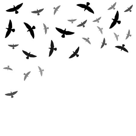 birds silhouette: Background with birds silhouettes