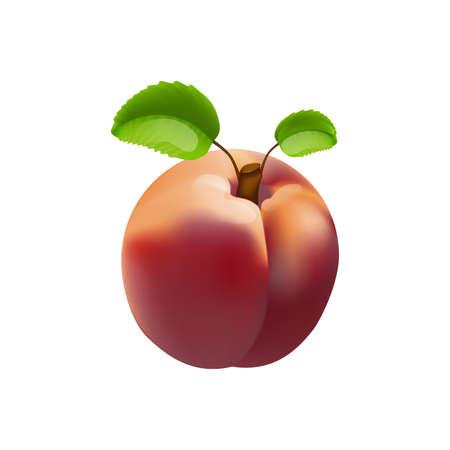 nectarine: Nectarine isolated
