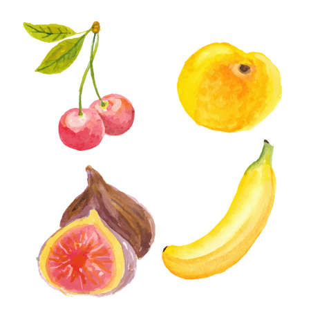 Cherries, apricot, figs and banana. Hand drawn in watercolor technique Vector