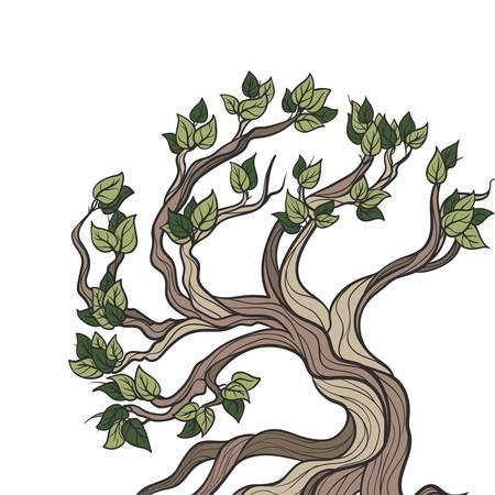 bonsai tree: Bonsai tree isolated Illustration