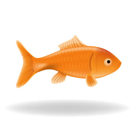 fish tail: Goldfish isolated Illustration