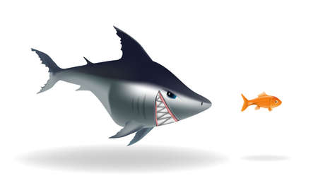 scarry: Big scarry shark chasing goldfish