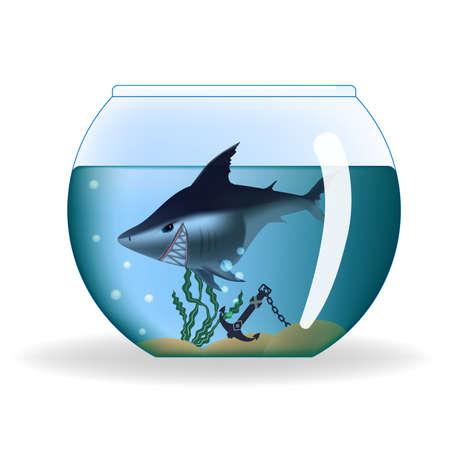 fish bowl: Big dangerous looking shark in a small aquarium Illustration