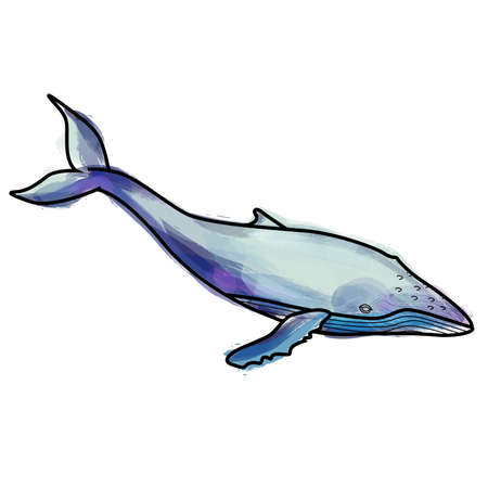 humpback: Grunge humpback whale illustration