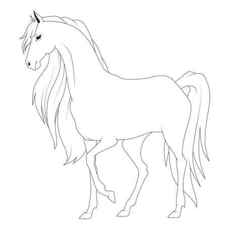 arabian horse: Coloring book: horse