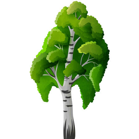 isolated tree: Birch tree isolated Illustration
