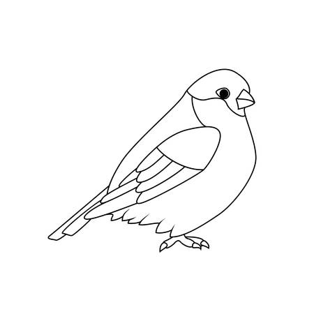 bullfinch: Coloring book: Bullfinch Illustration