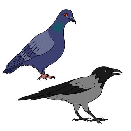 cuervo: Cuervo y la paloma ilustraci�n Vectores