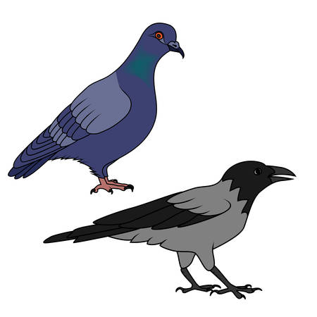 Crow and pigeon illustration