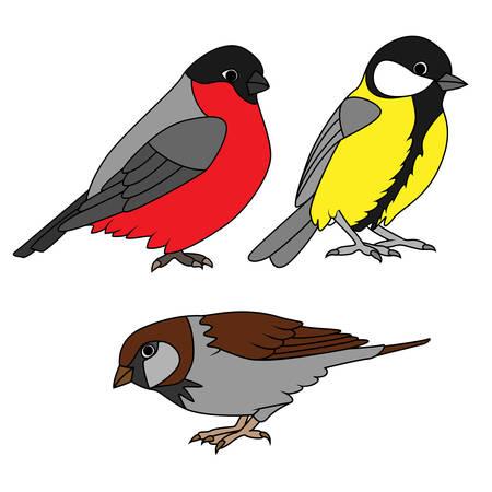 parus: Small urban birds set Illustration