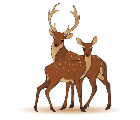 two animals: Couple of deers isolated Illustration