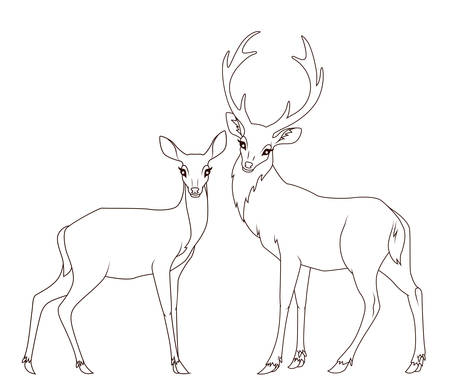 doe: Coloring book: Couple of deers isolated