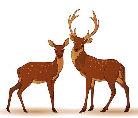 doe: Couple of deers isolated Illustration