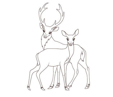 pencil drawing: Coloring book: Couple of deers isolated