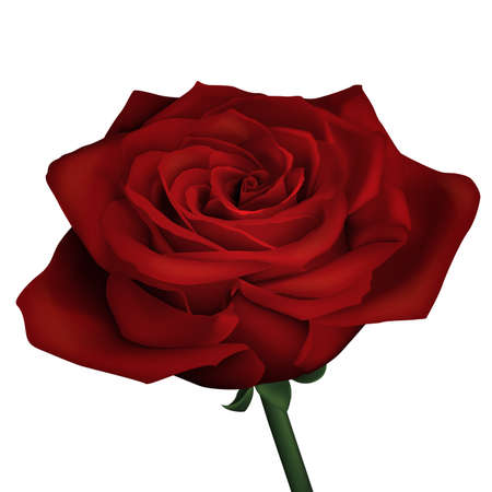 Realistic red rose Иллюстрация