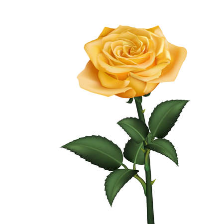 rose bouquet: Realistic yellow rose Illustration