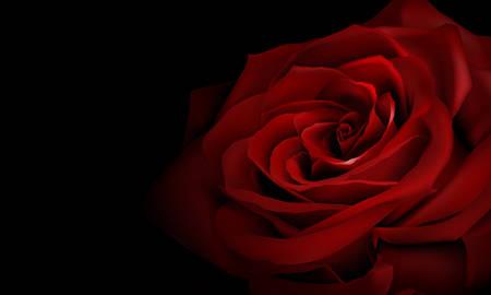 rosas rojas: rosa roja realista Vectores