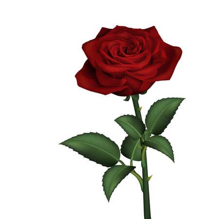 rosebud: Realistic red rose Illustration