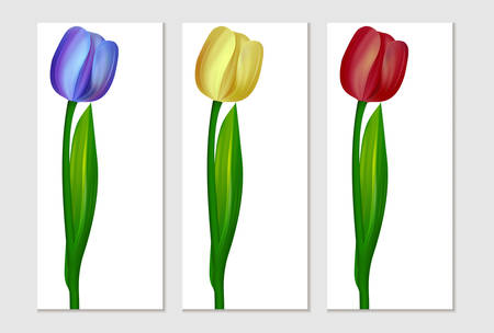 colors: Realistic tulip. three colors Illustration