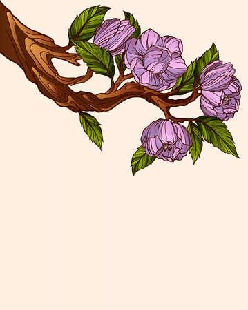 magnolia branch: Magnolia branch Illustration