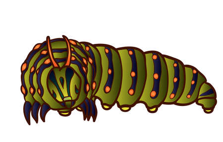swallowtail: Black Swallowtail caterpillar Illustration