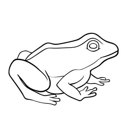 croaking: Coloring book: frog