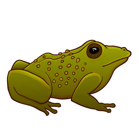 Toad illustration