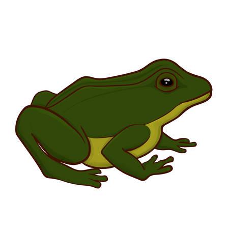 Groene kikker illustratie