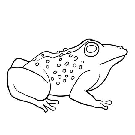 Coloring book: Toad Illustration