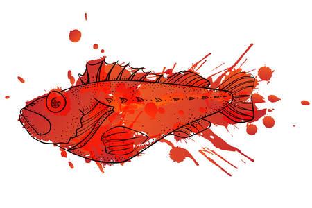 perch: Grunge ocean perch illustration
