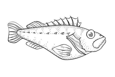 outline drawing of fish: Coloring book: ocean perch Illustration