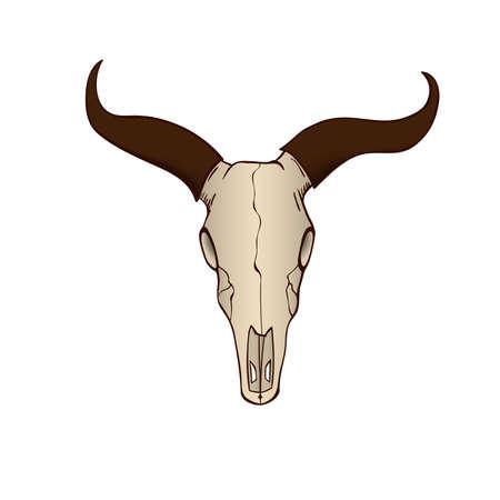 cow skull: Cow or bull skull isolated