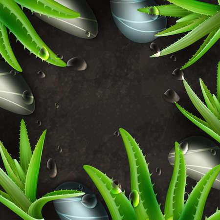 aloe vera plant: Aloe Vera and zen stones spa frame template