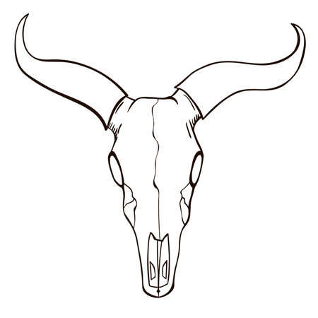 longhorn cattle: Bull skull sketch Illustration