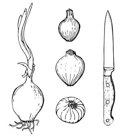 onions: Vector hand drawn set of objects. Onions and knife.